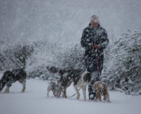 Dog Walking - December 22nd 2009
